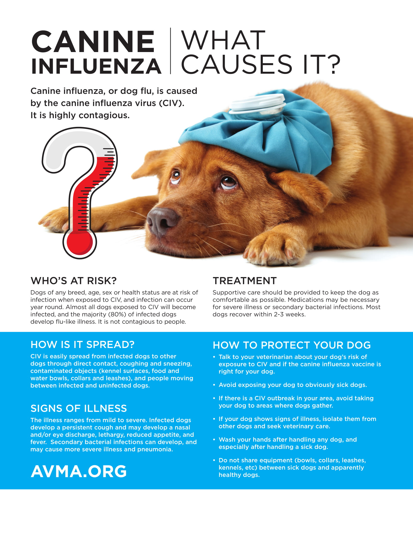 Canine Flu Outbreak in Ontario